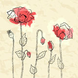 Red poppies on a crumpled paper background Stock Photography