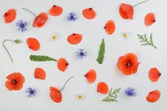 Red poppies, daisies, cornflowers and green leaves on white background. Flat lay, top view Royalty Free Stock Photos