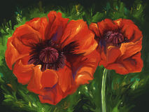 Red Poppies - Digital Painting. Digital painting of vibrant red poppy flowers Stock Image