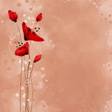 Red poppies. Drawing red poppies on watercolor background Stock Photo