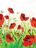 Red poppies field Royalty Free Stock Images
