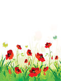 Red poppies field Stock Photography