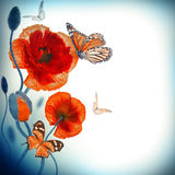 Red poppies field and blue cornflowers Royalty Free Stock Image