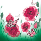 Red poppies field Royalty Free Stock Image
