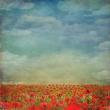 Red poppies field with blue sky,background. Red poppies field with blue sky Royalty Free Stock Photo