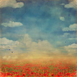 Red poppies field with blue sky. Background Stock Photo