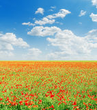 Red poppies field and blue sky Stock Photos