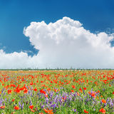 Red poppies field and clouds in blue sky Stock Photo