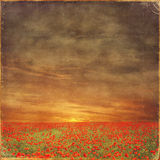 Red poppies field  and grungy effect Royalty Free Stock Photos