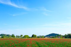 Red poppies field with mountains in background Royalty Free Stock Image