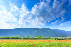 Red poppies field with mountains in background Royalty Free Stock Photos