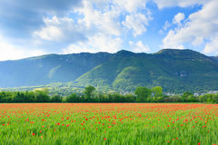 Red poppies field with mountains in background stock image