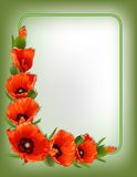 Red poppies floral frame, vector Stock Photo