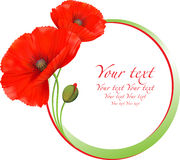 Red poppies floral round frame. Stock Photography