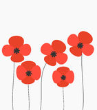 Red poppies flowers Royalty Free Stock Photo