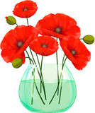 Red poppies flowers in glass vase. Royalty Free Stock Photography