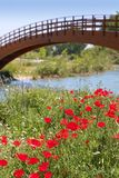 Red poppies flowers meadow river wooden bridge Royalty Free Stock Image