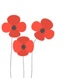 Red poppies flowers Stock Photo
