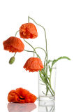 Red poppies in glass vase Royalty Free Stock Photography