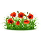 Red poppies in grass., vector Stock Images