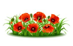 Red poppies in grass., vector Royalty Free Stock Image