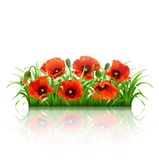 Red poppies in grass., vector Stock Image