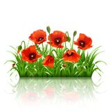 Red poppies in grass., vector Royalty Free Stock Photos