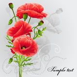 Red poppies on a gray background-EPS10. Red poppies on a gray background.Romantic background for your text Royalty Free Stock Photos