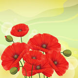 Red poppies on green background. Royalty Free Stock Photos