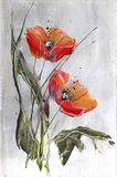 Red poppies on grey Royalty Free Stock Images