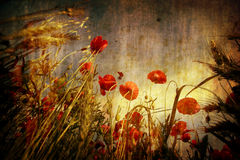 Red poppies in grunge background Stock Photo