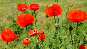 Red poppies illustration in the style of impressionism. Bright red poppies on a green background. The illustration is made in the style of Impressionist Royalty Free Stock Images