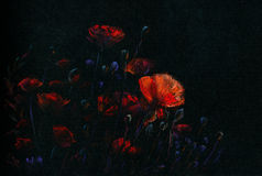 Night poppies Stock Photo