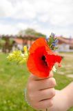 Red poppies and other field flowers bouquet Stock Photo