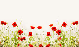 Red poppies, outdoor floral nature background Royalty Free Stock Images
