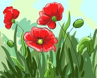 Red poppies painted by hand grow on the field with green leaves. Illustration Stock Images
