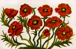 Red poppies, painting Royalty Free Stock Image