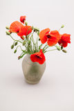 Red poppies Papaver rhoeas and buds Stock Photography