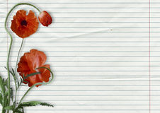 Red poppies on paper background with space for text Stock Photo