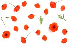 Red poppies petals pattern on white background Royalty Free Stock Photo