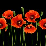 Red poppies in a row. Stock Photography