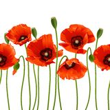 Red poppies in a row. royalty free illustration