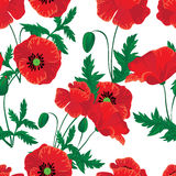 Red poppies seamless Royalty Free Stock Photography