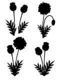 Red poppies set. Vector. Illustration Royalty Free Stock Images