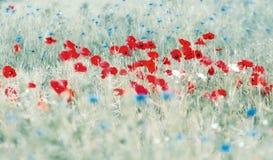 Poppies and cornflowers Stock Photo