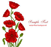 Red poppies. Vector illustration of red poppies bouquet on white background Stock Photography