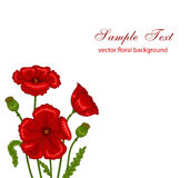 Red poppies. Vector illustration of red poppies bouquet on white background Stock Images