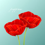 Red poppies. Vector illustration of a spring background with poppies Royalty Free Stock Photo