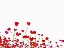 Red poppies on white background Royalty Free Stock Images