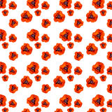 Red poppies on a white background Stock Photo